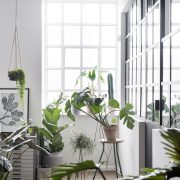Greenify-stueplanter-ferm-living-violinfigen-monstera-philodendron-ferm-plant-hanger-uashmama-kaktus