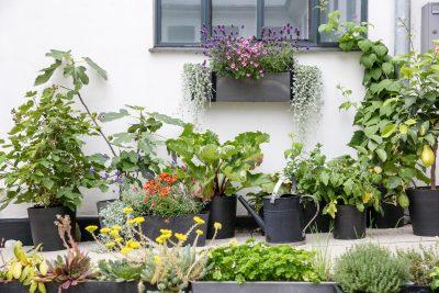 Gå foråret i møde med en smuk altan - Greenify København