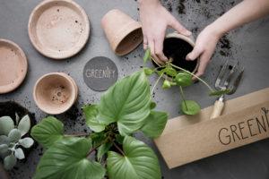 greenify-pilea-inderkasse-inspiration-plantejord