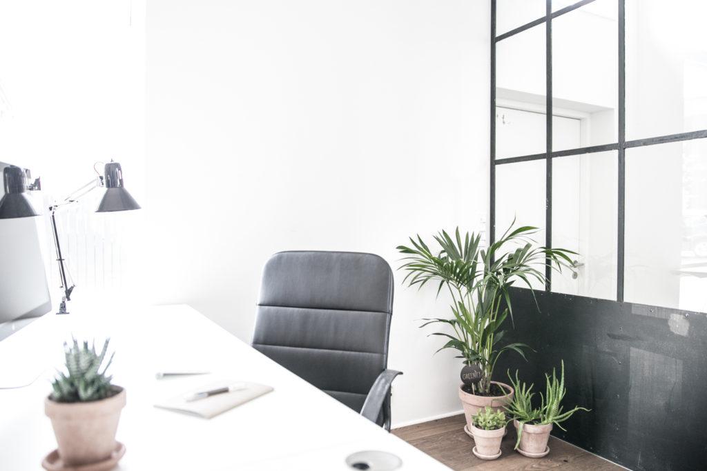 komplet-kontorpakke-kentiapalme-kaktuspakke-kontorbeplantning