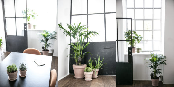 kontorpakke-indret-med-planter