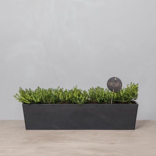 Greenify-altankasse-mork-foraarslyng