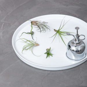 air-plants-fad-forstover1