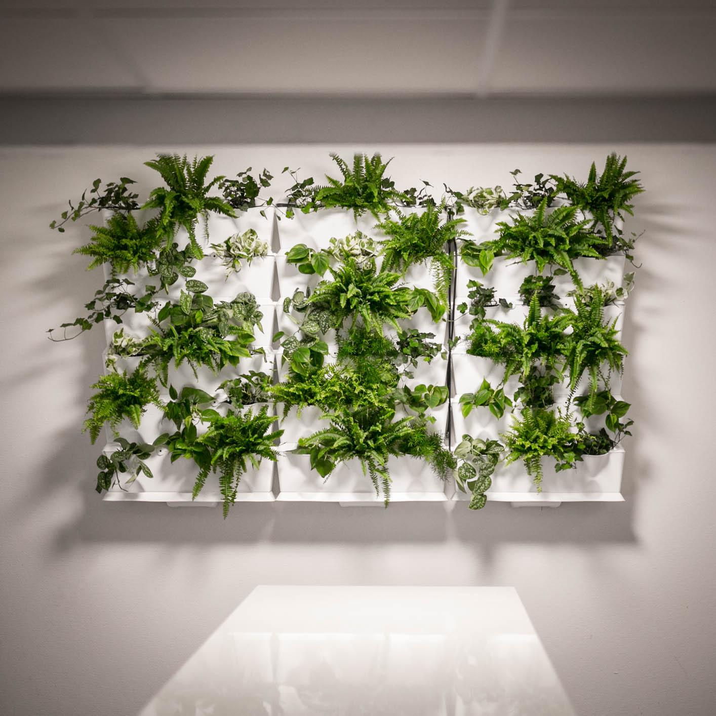 Plantevæg Projektløsning