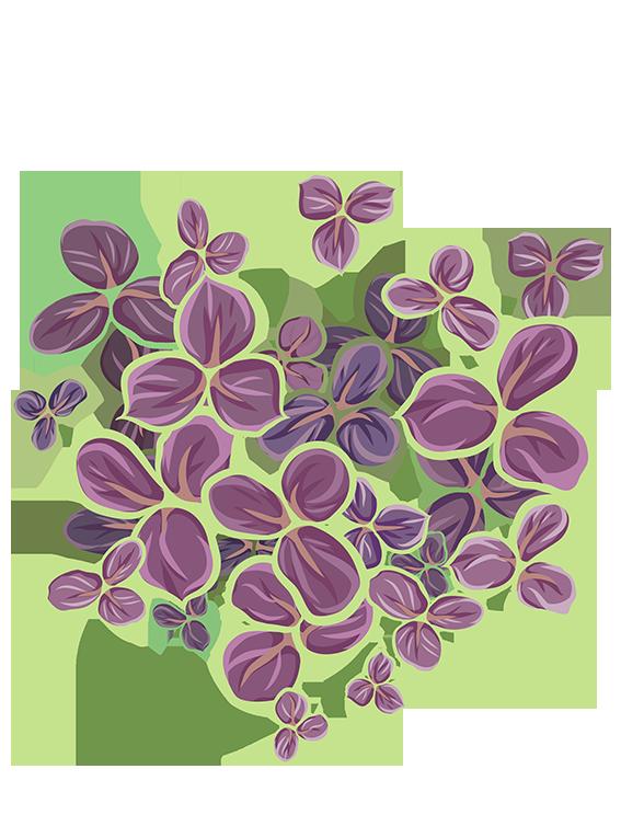 Trifolium Kløver