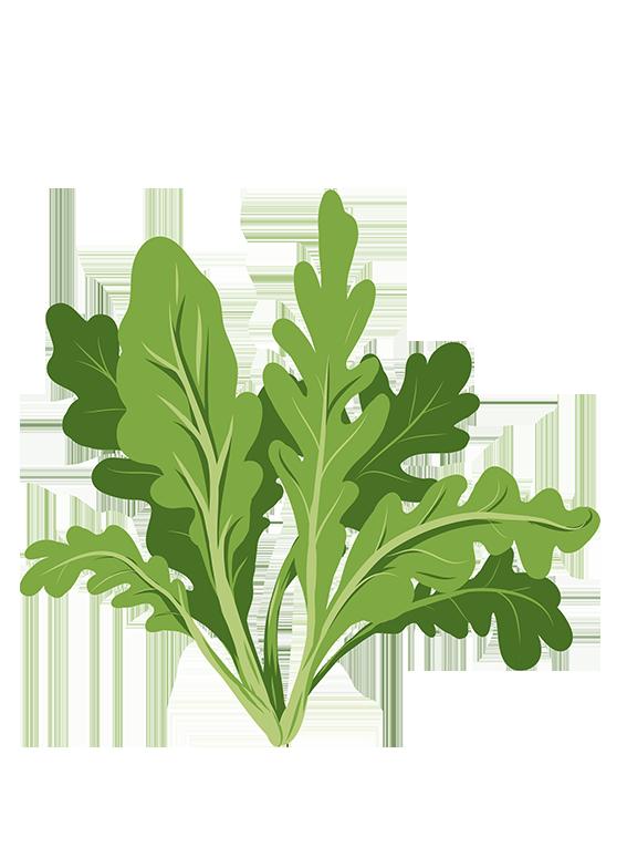 Rucola - Fyld selv altankasser fra Greenify