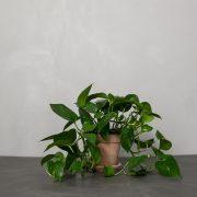 Guldranke-Greenify