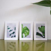 Greenify postkort
