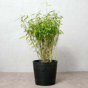 bambus, udendørsplante, greenify