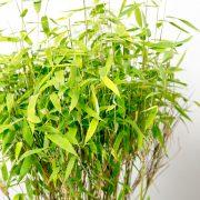 Bambus_detalje_Greenify