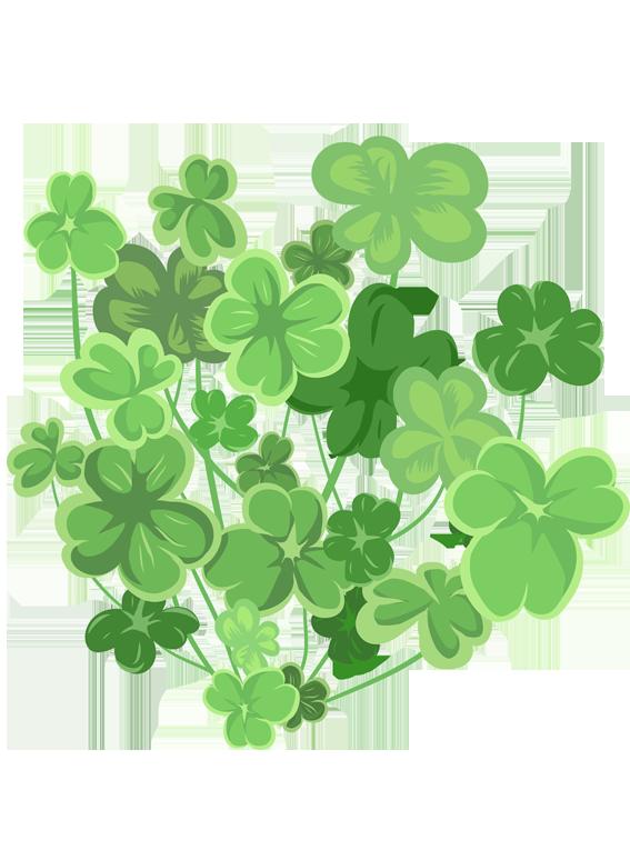 Trifoliumkløver  - Fyld selv altankasser fra Greenify