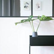 monstera_afskarne_greenify_plantbox