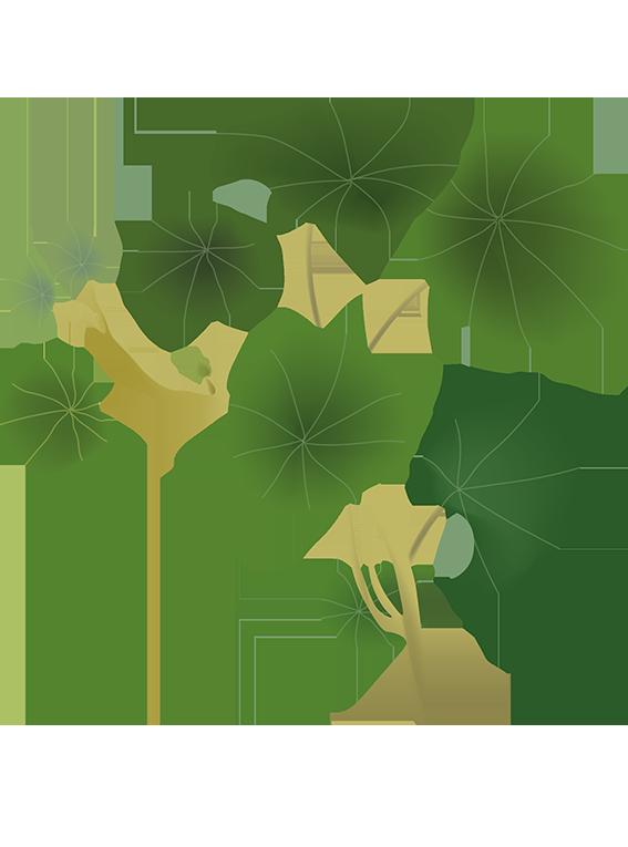 Tallerkensmækker  - Fyld selv altankasser fra Greenify