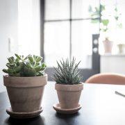 Plantepakke-kvadrat4