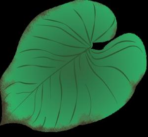 planteguide2_vandmangel