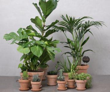 Stor plantepakke