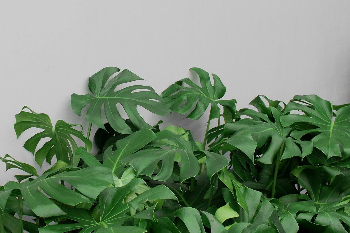 Indendørsplanter - Greenify